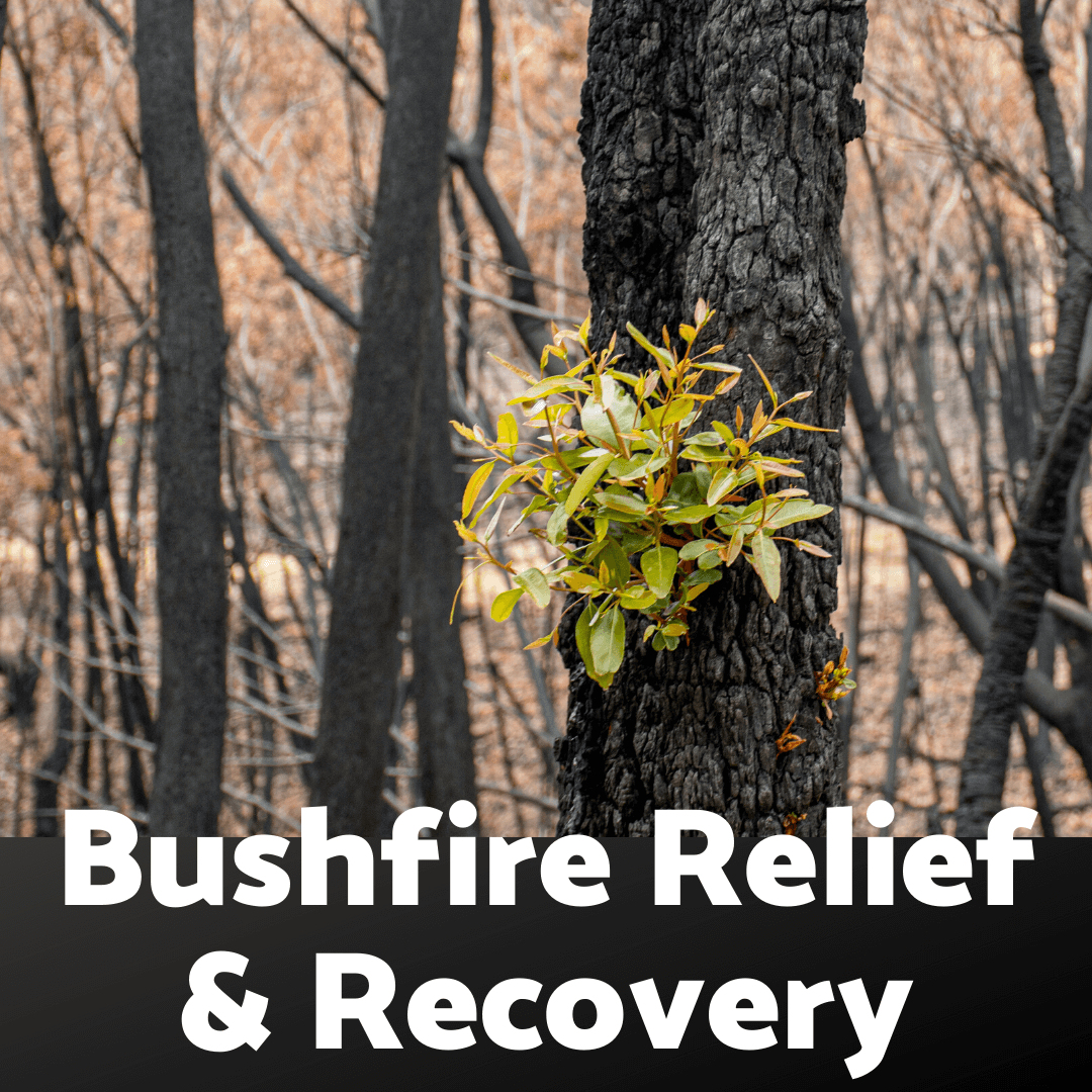 Bushfire Support for Small Businesses